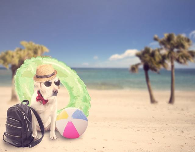犬と海辺を散歩